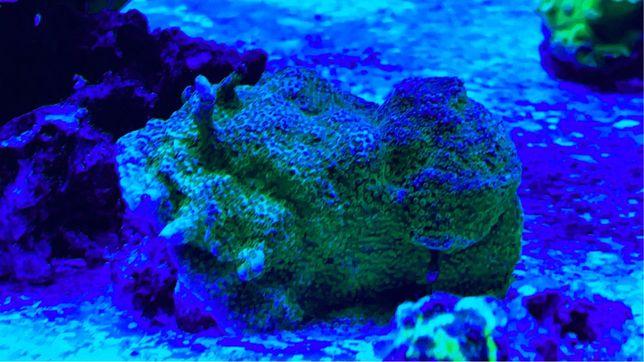 Corais de agua salgada