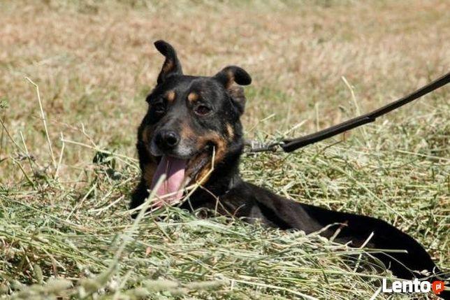 Psiak po przejściach szuka domku gdzie zazna szczęścia i miłości