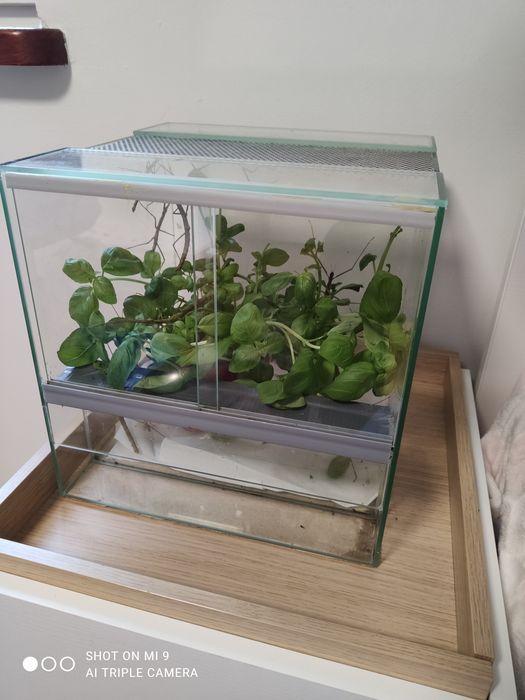 Sprzedam terrarium z patyczakami rozmiar 28x28x28. Poznań - image 1
