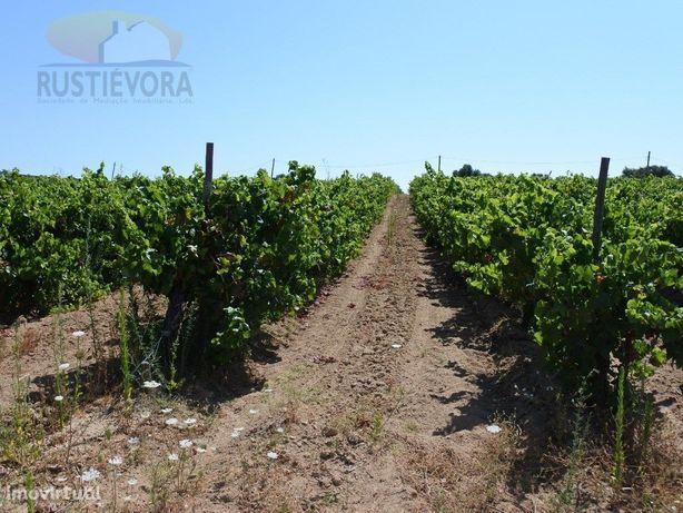 Propriedade | com Exploração integral de vinhas | Vidigueira