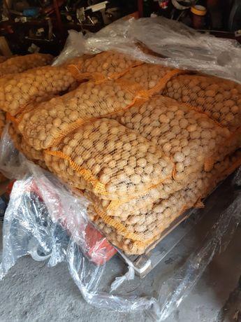Ziemniaki jadalne wielkość sadzeniak 25-45 lord, denar, toskana OKAZJA