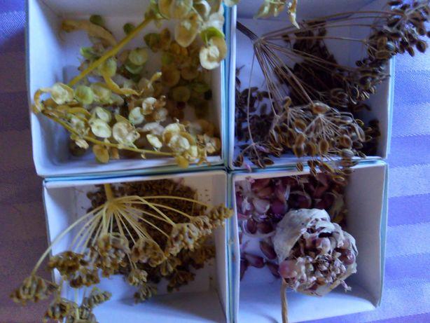 Семена для зеленой грядки: чеснок, петрушка, укроп, лебеда