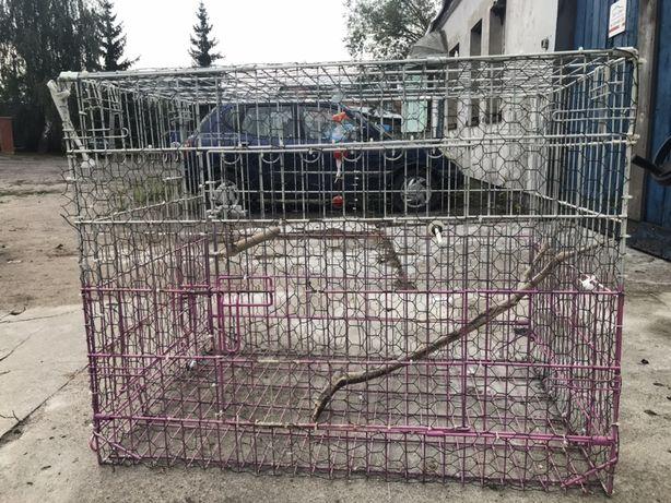Duża klatka dla zwierząt
