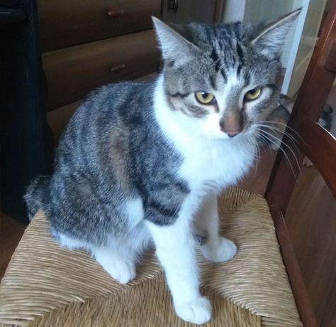 Молодому котику нужен дом / Кастрирован, возраст 7 мес.