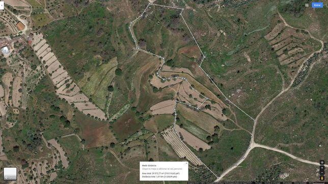 Quinta composta por terreno de cultivo e pinhal