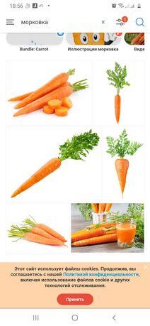 Продам морковку домашнюю