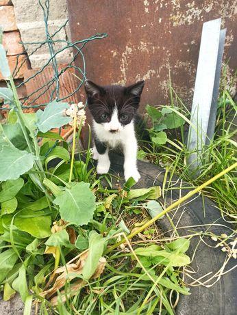 Kocięta szukają nowego domu