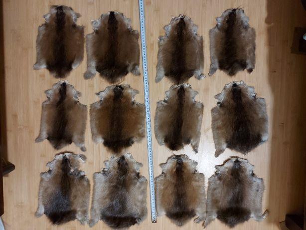 Продам шкури ондатри чинені / шкуры ондатры