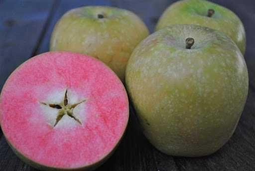 Саженцы сладких  красномясых яблонь