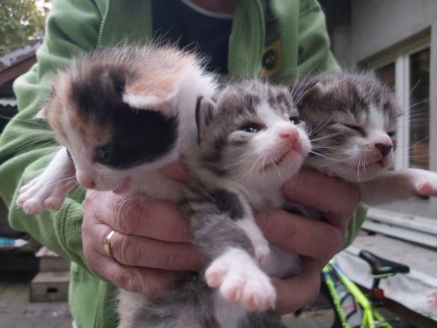 Oddam w dobre ręce kotki