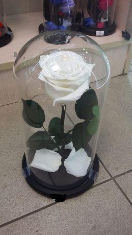 Долговечная роза в колбе 800грн