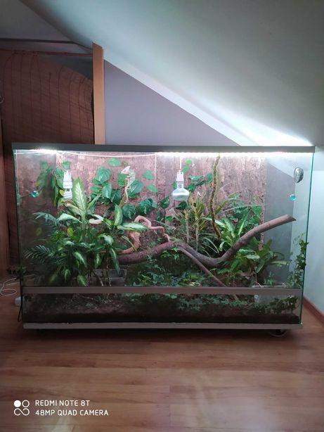 Ogromne szklane terrarium kameleon żywe rośliny led !!!