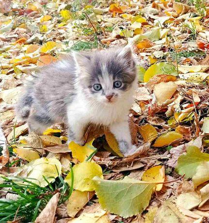 Ищет дом маленький котенок, девочка!