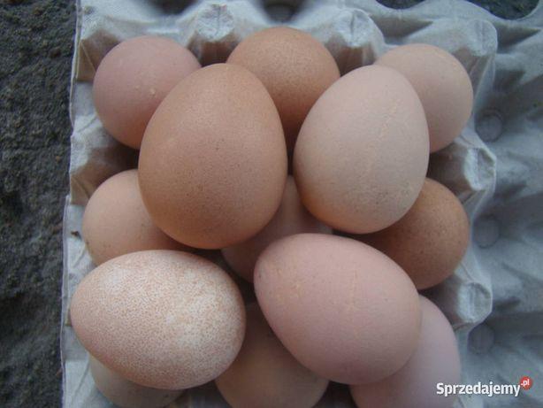 Jajka perlicze konsupcyjne