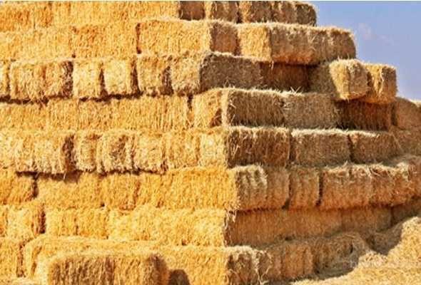 Солома пшеничная в тюках 20гр самовывоз  , есть много
