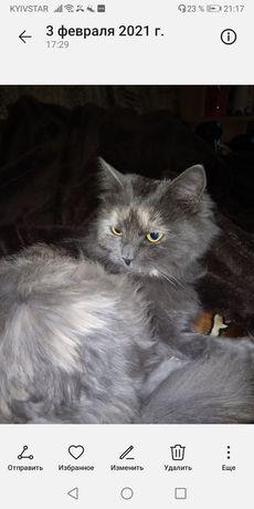 Пропала кошка Дыма район пр. Мазепы