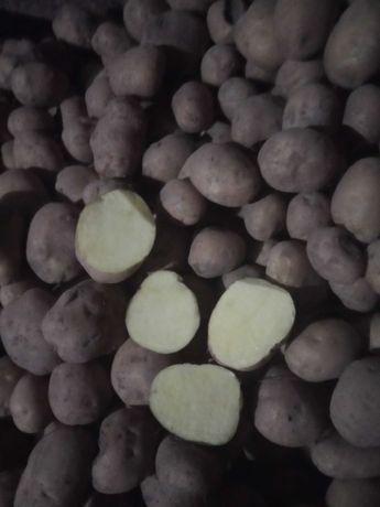 Sprzedam ziemniaki satina