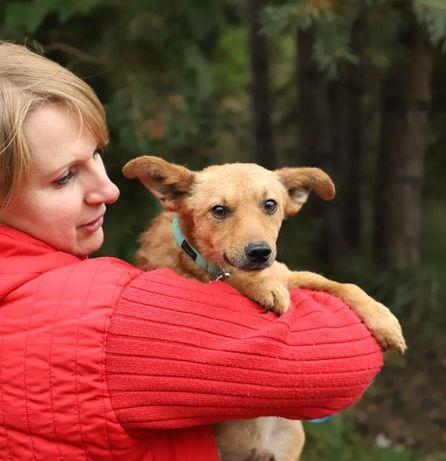 JULEK mały psi aniołek szuka domu