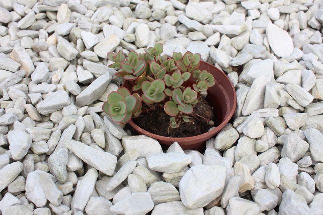 Kora kamienna Silver White, Kamień ozdobny, ogrodowy, dekoracyjny