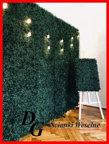 Ścianka weselna bukszpanowa + tablica powitalna gratis