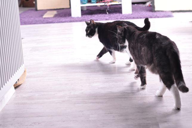Dwa koty szukają domu