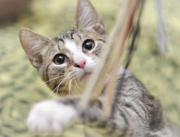 Харизма-полосатик и другие, котенок котята