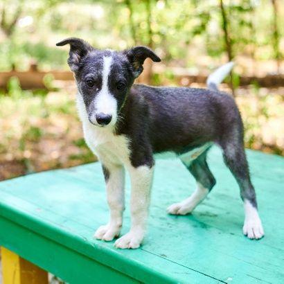 Активный щенок Стич ищет своего человека щенок щенки щенята пес щеночк
