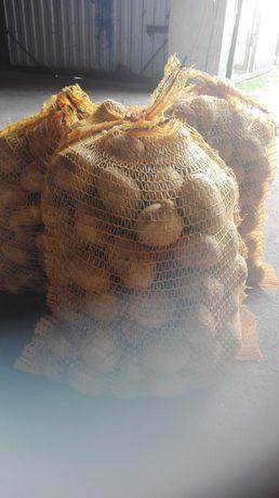 MŁODE,Ziemniaki jadalne