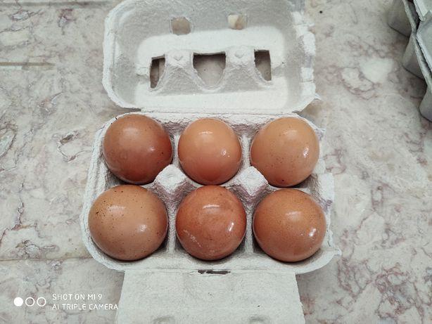 Ovos caseiros fresco