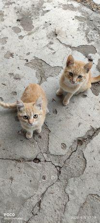 Рыжие котики бесплатно!!!