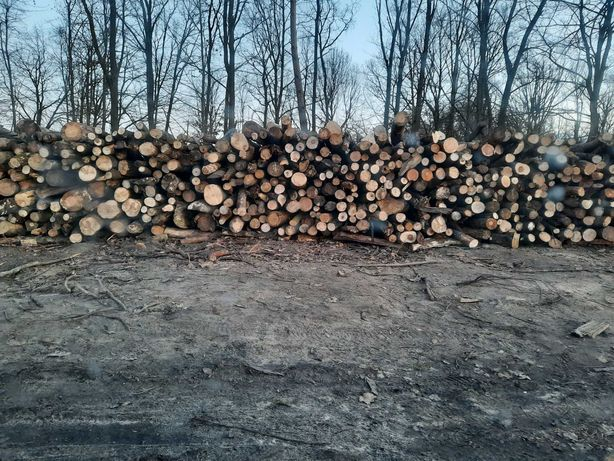 Drewno opałowe sosna i kominkowe