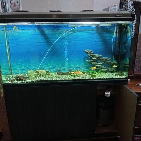 Акваріум, аквариум.