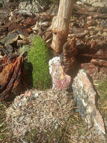 Кора сосновая для декора сада и растений!