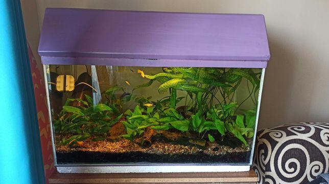 Piękne akwarium z rybkami 120l