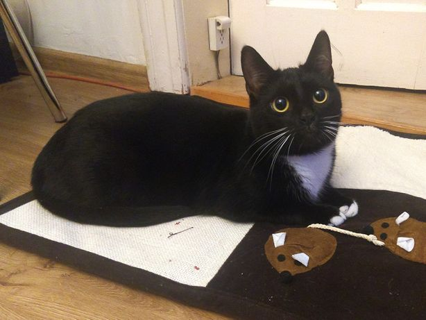 Zaginęła kotka Fuksja 29 grudnia 2020