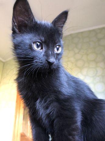 Терміново! Чорна красуня шукає дім! Кийька, 3 місяці.