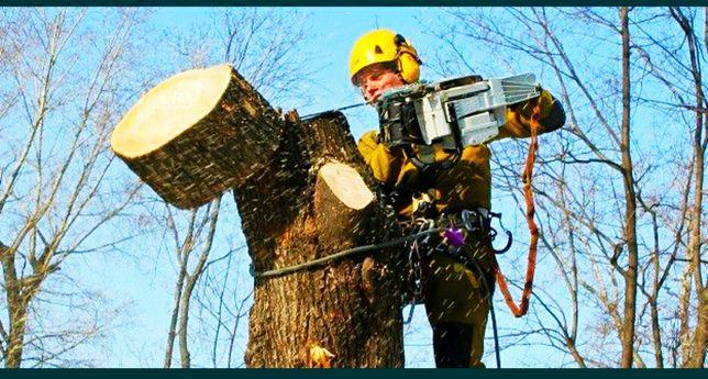 Спилювання видалення обрізка дерев будь-якої складності Арбористи
