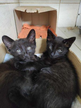 Маленькике котята Дин и Ден (2,5-3 месяца) добрые и игривые