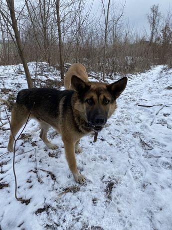 Найдена/ пропала собака