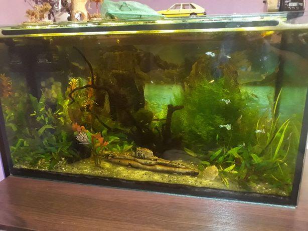 Akwarium 830x460x400mm szkło 8mm z wypozażeniem i rybami