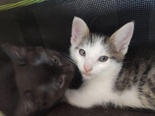 Urocze małe kociaki do adopcji