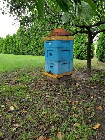 Ule Wielkopolskie styropianowe ze pszczołami