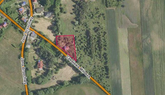 Działka 2292 m2, Brzezie k. Sulechowa, Sulechów