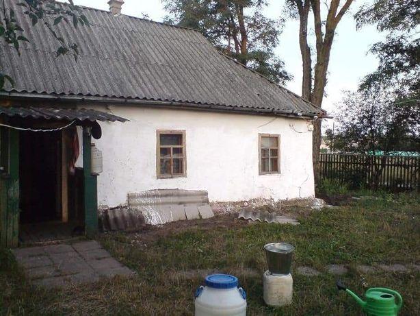 Приватизована ділянка, с.Стави, Кагарлицький р-н