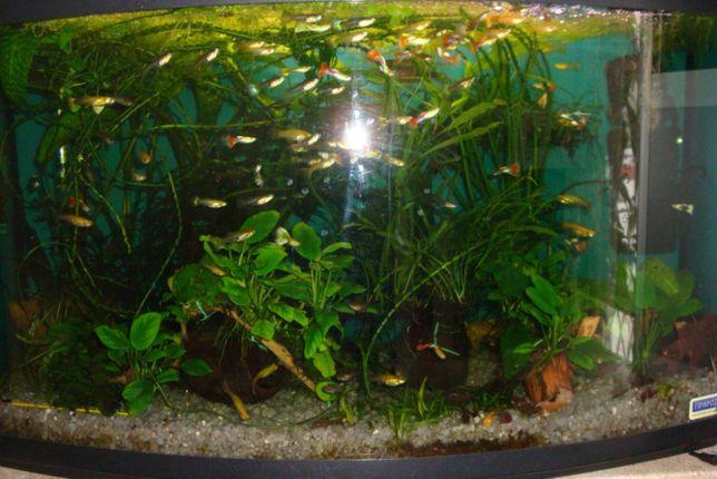 Акваріумні рослини від 5грн, акваріумістика, декор, відправка по Украї