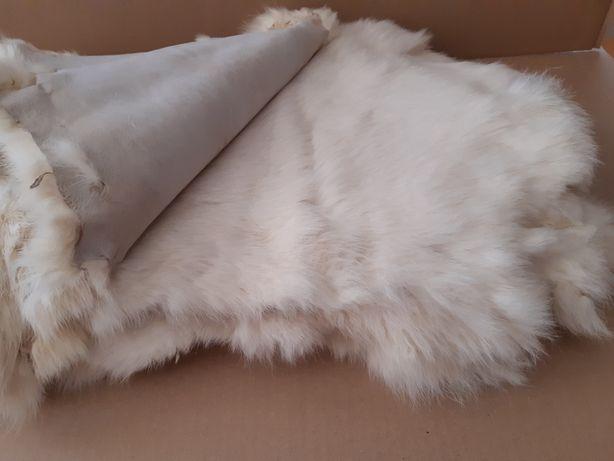10 peles de coelho branco