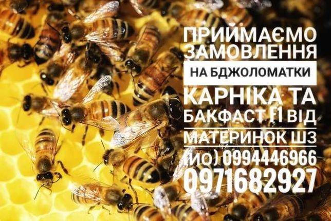 Приймаємо замовлення на бджоломатки Карніка та Бакфаст f1