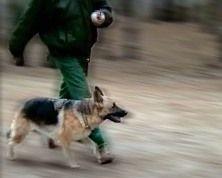 Дрессировка собак в Энергодаре