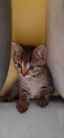 Kotek ok 3 miesiące