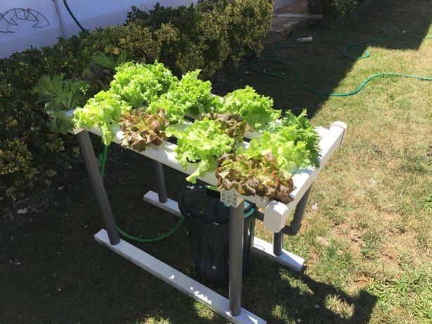 Hidroponia - Kit para 40 plantas - Loja Oficial